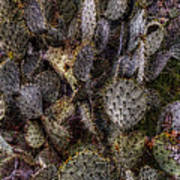 Prickly Pear Cactus At Tonto National Monument Poster