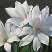Primavera En Flor Poster