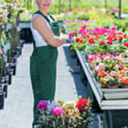 Professional Gardener At Work In A Nursery. Poster
