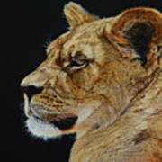 Profile Of A Lioness Poster
