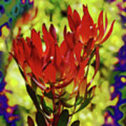 Protea Flower 4 Poster