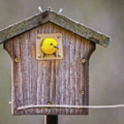 Prothonotary Warbler House Poster
