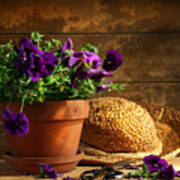 Pruning Purple Pansies Poster by Sandra Cunningham