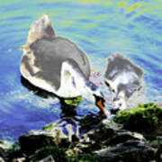 Psychedelic Mute Swan And Cygnet Feeding Poster