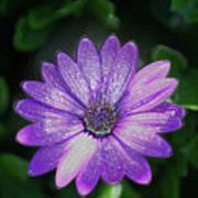 Psychedelic Purple Petals  Poster