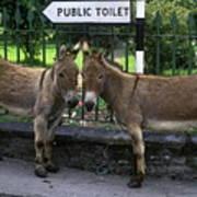 Public Toilet Poster