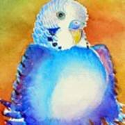 Pudgy Budgie Poster