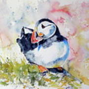 Puffin On Stone Poster