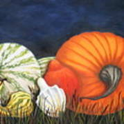 Pumpkin And Gourds Poster