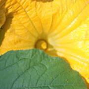 Pumpkin Flower Poster