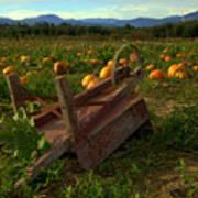 Pumpkin Patch. Poster