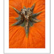 Pumpkin Stem Poster Poster