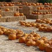Pumpkins On Bales Poster