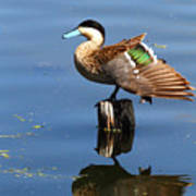 Puna Teal Reflections Poster