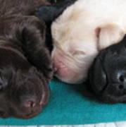 Puppies Dreams 2 Poster