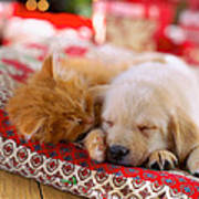 Puppy And Kitten Snuggling On Red Poster