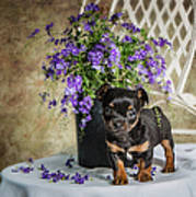Puppy Dog With Flowers Poster