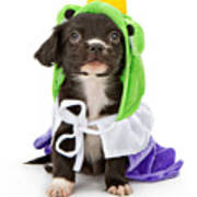 Puppy Frog Prince Poster by Susan Schmitz