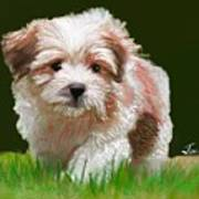 Puppy In High Grass Poster