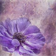 Purple Anemone Art Poster