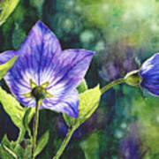 Purple Bell Flower Poster
