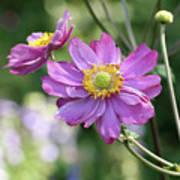 Purple Blossoms 2 Poster
