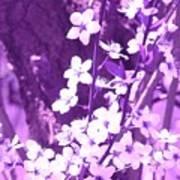Purple Blossoms Poster