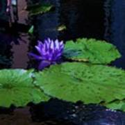 Purple Blue  Lily Poster