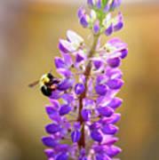 Purple Buzz Poster