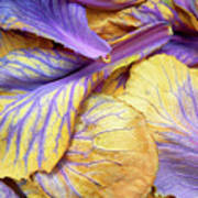 Purple Cabbage Poster
