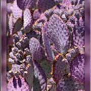 Purple Cactus Canvas Poster
