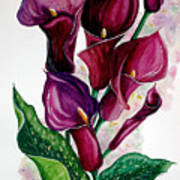 Purple Callas Poster