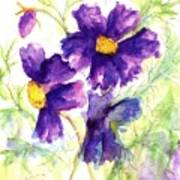 Purple Cosmos Poster