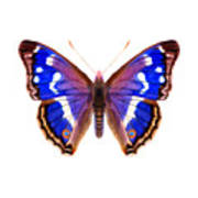 Purple Emperor Butterfly Poster