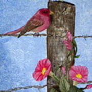 Purple Finch And Morning Glories Poster