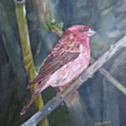 Purple Finch Poster
