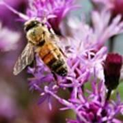 Purple Flower Bee Poster