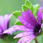 Purple Flower Closeup Poster