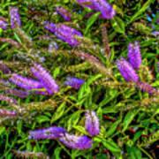 Purple Flowers Of Chiloe Poster