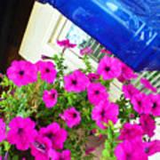 Purple Flowers On White Window 2 Poster