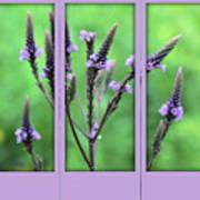 Purple Flowers Through A Window Poster