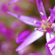 Purple Fragrance Poster