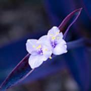 Purple Heart Flowers Poster