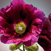Purple Hollyhock Poster