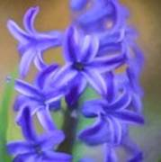 Purple Hyacinths Digital Art Poster