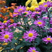 Purple In Garden Poster