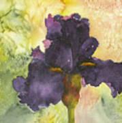Purple Iris Poster