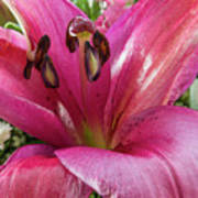 Purple Lilly In A Flower Bouquet Extreme Close-up Poster
