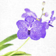 Purple Orchid Bloom Poster