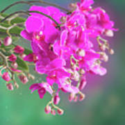 Purple Orchid Branch Poster